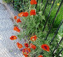 Poppy Road by starprice