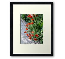 Poppy Road Framed Print