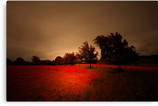 THIS FIELD OF RED by leonie7