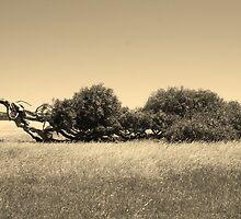 The Leaning Tree by Joel Mason