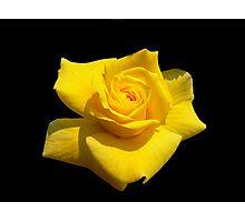 Yellow Yearning! Photographic Print