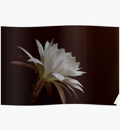 Flower of Cactus III Poster