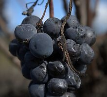 Fruit Of The Vine by Ben Loveday