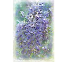 wonderful wisteria Photographic Print