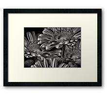 GERBERA DAISY GREY Framed Print