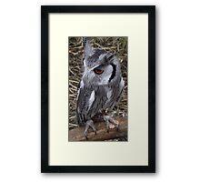 Little Grey Owl Framed Print
