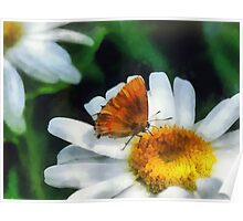 Skipper on a Daisy Poster