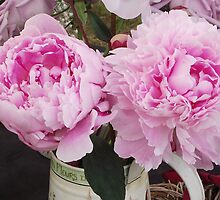 Peonies by TheShutterbugsG