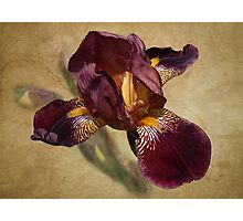 Flag Iris Photographic Print