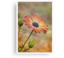 Peach Magic Canvas Print