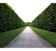 Green symmetry Photographic Print