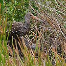 Limpkins by Dennis Cheeseman