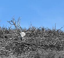 After the fire.  by Neil MacNeill