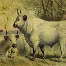 The Cows Came Home by Sarah Vernon