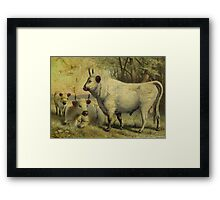 The Cows Came Home Framed Print