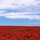Poppy Field by fernblacker