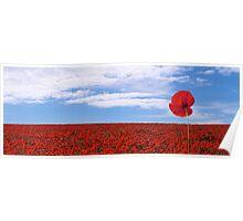 Poppy Field Poster