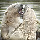 Bear Fight by peaky40