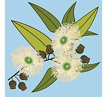 White Gum Flowers and Gumnuts Photographic Print
