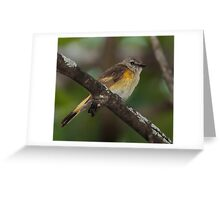 Juvenile Redstart Greeting Card