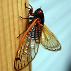 Perched Cicada by LoganG
