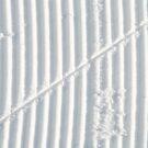 Tracks in the snow by Arie Koene