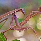 Praying Mantis by LoganG
