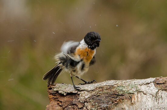 Let`s BOOGIE! by Nicole W.