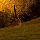 Night animal by esmerose