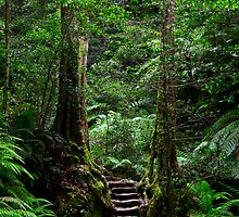 Sentinel Trees, Rodriguez Pass Stairway by Erland Howden