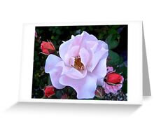 Governor General's Roses 12 Greeting Card