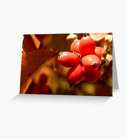 Fall Walk in my Neighborhood -CloseUp       ^ Greeting Card