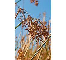 Summer Flowers - Arizona Photographic Print