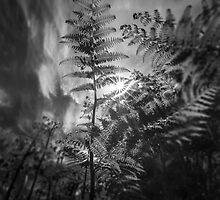 Fern by maxblack