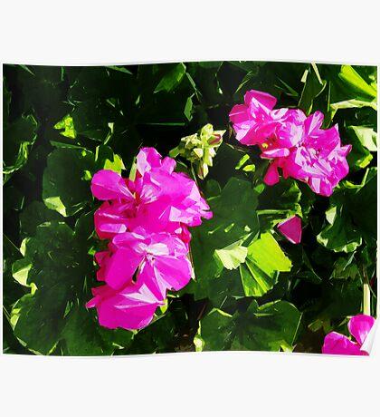 California Flowers Poster