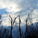 264/365 against a winter sky by LouJay
