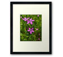 Deptford Pink Framed Print