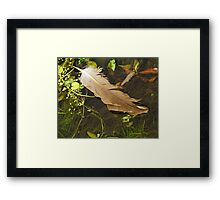 Feather of Hope Framed Print