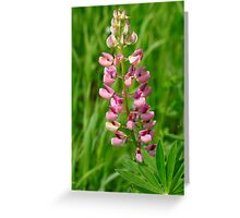 Pink Lupine I Greeting Card