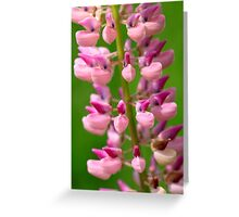 Pink Lupine III Greeting Card