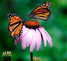 Flying Flowers... by Karen  Helgesen