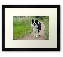 Stay on the path Framed Print