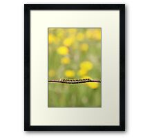 On the Wire Framed Print