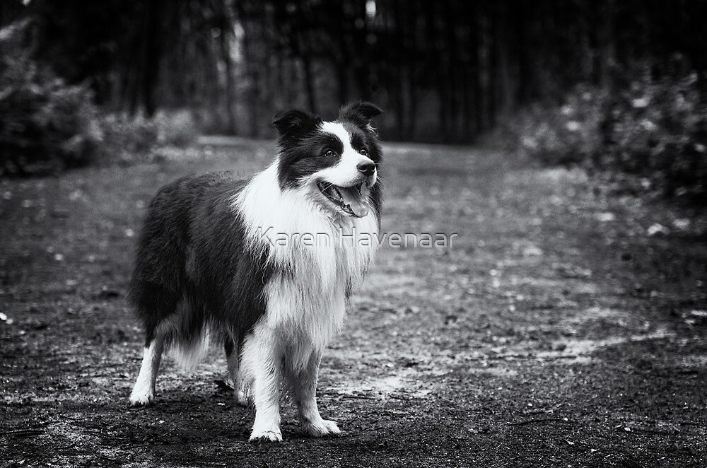 Forest Dog (Joker) by Karen Havenaar