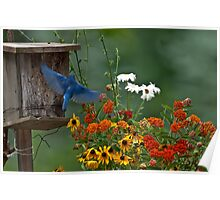 BLUEBIRD and colorful flowers Poster