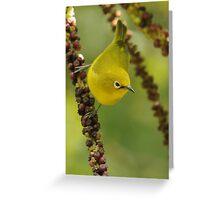 African Yellow White-eye Greeting Card