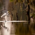 Great Egret with Fish, Lake Martin, Breaux Bridge, Louisiana by Paul Wolf