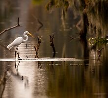 Great Egret with Fish, Lake Martin, Breaux Bridge, Louisiana by Paul Wolf