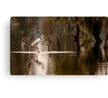 Great Egret with Fish, Lake Martin, Breaux Bridge, Louisiana Canvas Print