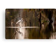 Great Egret with Fish, Lake Martin, Breaux Bridge, Louisiana Canvas Print